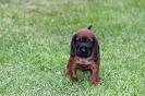 BGS-Tews | Bilder 02.09.2013 | Bayerischer Gebirgsschweißhund