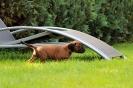 BGS-Tews | Welpen 05.09.2013| Bayerischer Gebirgsschweißhund