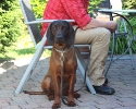 BGS-Tews | Welpen 2.Wurf | BGS - Hund