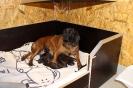 BGS-Tews | Bilder 2014 | BGS - Hund | Welpen gewölft am 18.10.2014