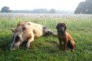 BGS-Tews   Bilder 2016   BGS - Hund
