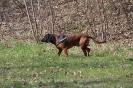 BGS-Tews | Bayerischer Gebirgsschweißhund