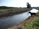 BGS - TEWS - Bayerische Gebirgsschweißhunde_4