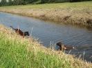 BGS - TEWS - Bayerische Gebirgsschweißhunde_5