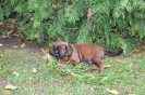 BGS-Tews   Bilder 2014   BGS - Hund